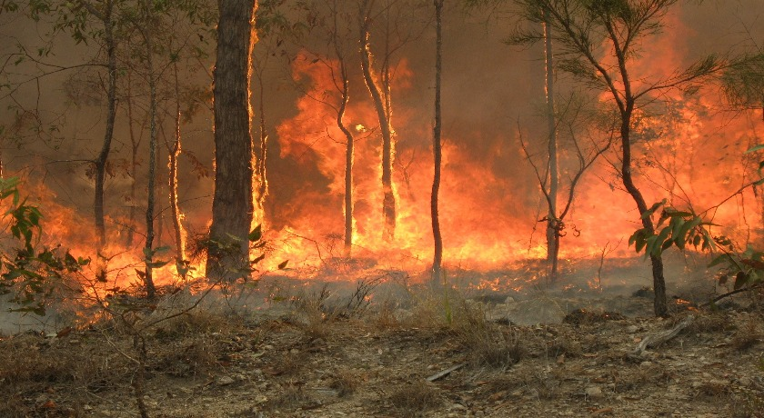 Bush fire at Captain Creek central Queensland Australia credit 80 trading 24 wikimedia